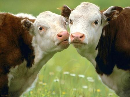 численности поголовья скота, в отчетности Бузулукского района